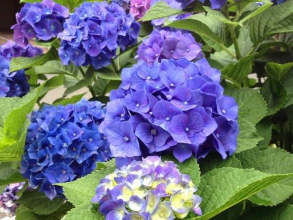 初夏の花々が美しい季節です。